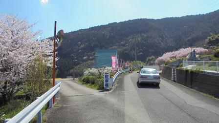 広棚の芝桜9.jpg