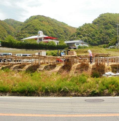 野島スコーラ6.jpg
