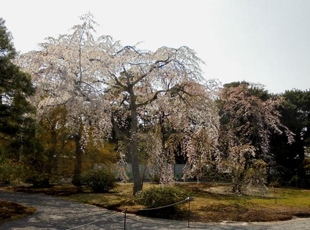 京都御所18.jpg