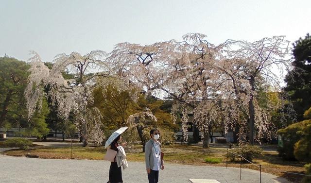 京都御所19.jpg