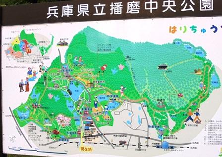 播磨中央公園9.jpg